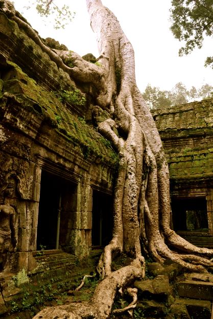 angkor_ta_phrom_arbre