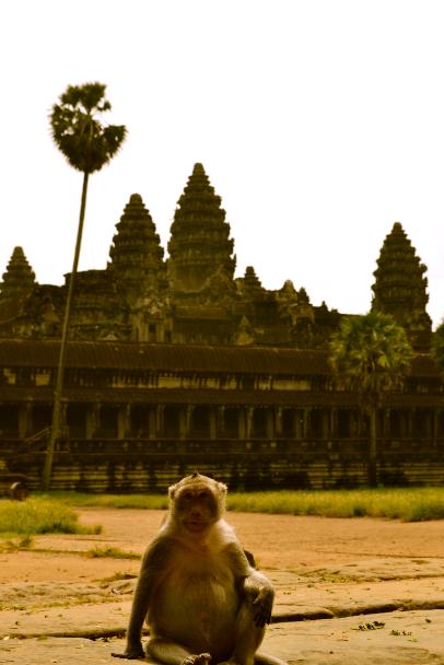 angkor_singe_temple