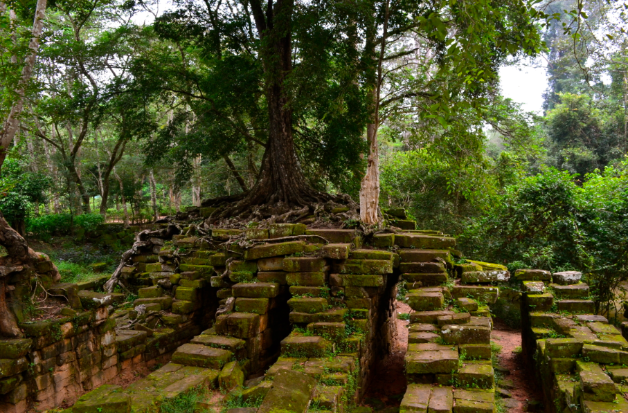 angkor_temple_nature