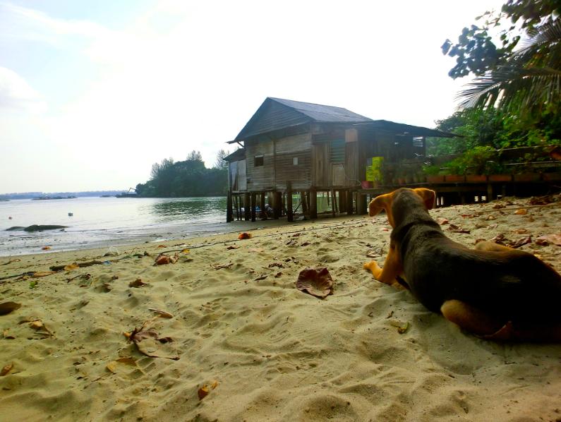 pulau_ubin_singapour_chiens