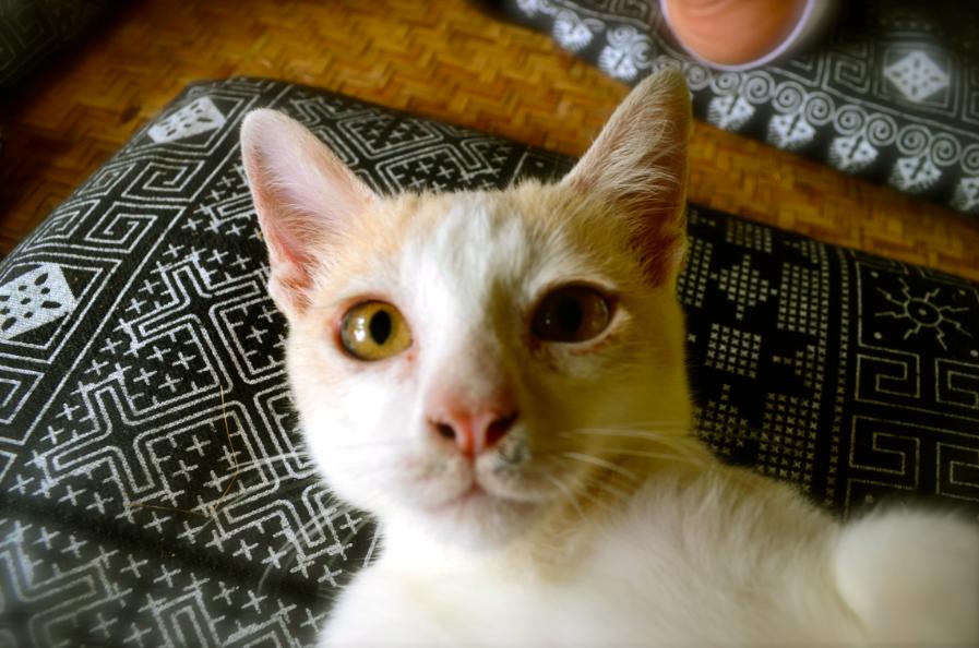 selfie_chat_thailande